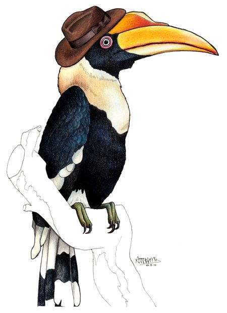 birds in hats hornbill