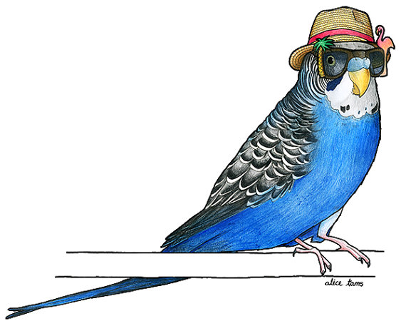birds in hats sale budgie