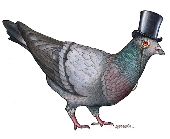 birds in hats sale pigeon